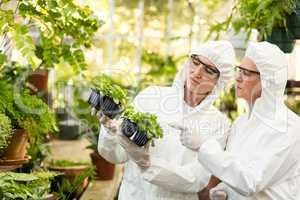 Female scientists in clean suit examining saplings