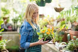 Female gardener holding potted plant