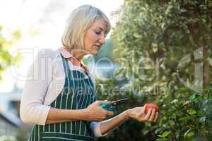 Female gardener holding pruning shears and tomato