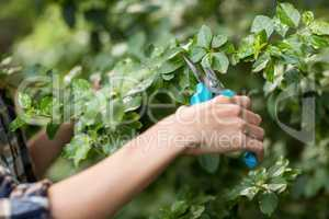 Cropped image of gardener pruning plants