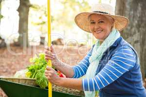 Portrait of confident gardener with tool and wheelbarrow at gard