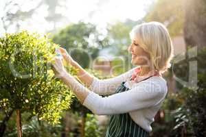 Happy female gardener pruning plants on sunny day