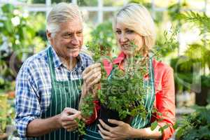 Couple holding potted plant at greenhouse