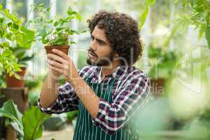 Young male gardener examining potted plant