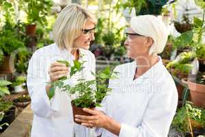 Female scientists holding potted plant