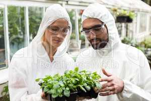 Coworkers in clean suit examining potted plants