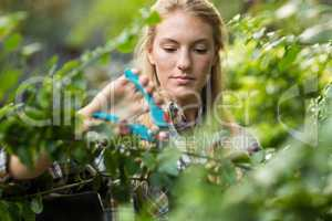Female gardener pruning plants at greenhouse