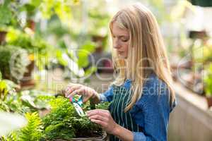 Female gardener pruning at greenhouse