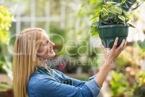 Woman hanging potted plant at greenhouse