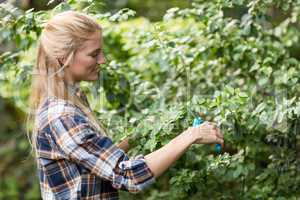 Female gardener pruning plants