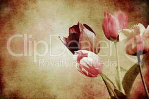 tinted tulips textured