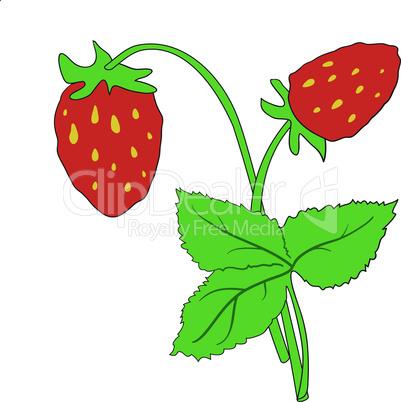 The bush of ripe strawberries