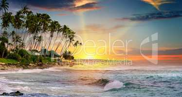 ocean, tropical palms and a beautiful sunset