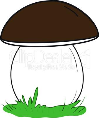 Large white mushroom