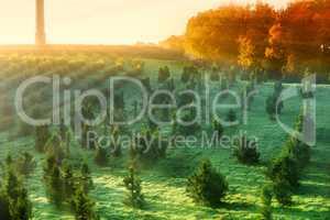 Landschaftsbild mit Morgennebel und Sonnenstrahlen