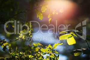 Dramatic tree leaves with light leak landscape background