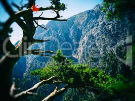 Vivid mountain landsacpe film scan bokeh