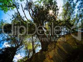 Gigantic vivid tree sun persepctive background