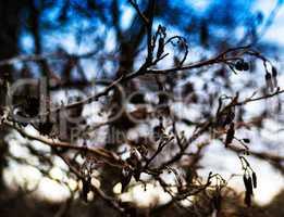 Horizontal vivid autumn tree branches bokeh background backdrop