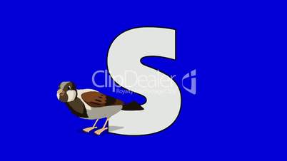 Letter S and Sparrow (foreground)