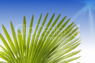 Grünes Blatt einer Palme