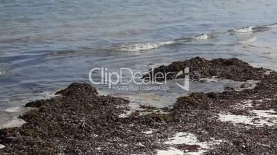 Organic sea grass at the beach