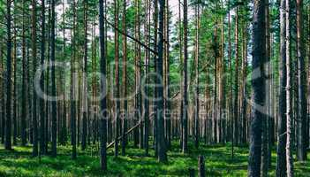 Horizontal vivid symmetric forest wood composition background ba