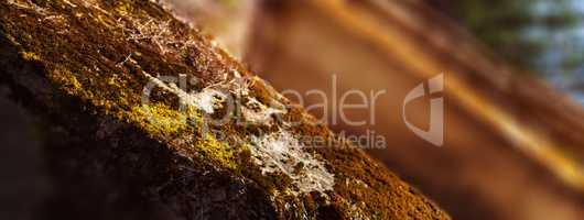 Horizontal vivid warm light moss on bunker landscape perspective