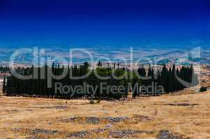 Horizontal vivid cypress accumulation landscape background backd