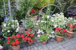 Blumen in einem Garten