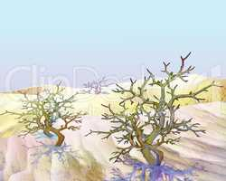 Desert Plant Shrub Saxaul Under Blue Sky