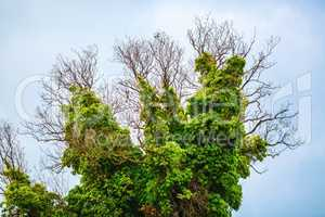 Tree with green vegetation