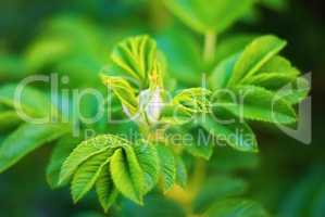Bright green leaves with soft focus