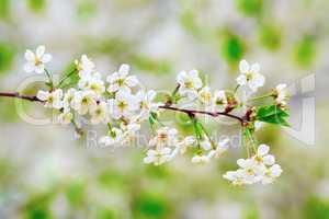 Spring flowering background