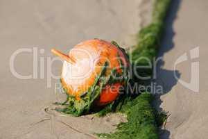 Plastic beach buoy