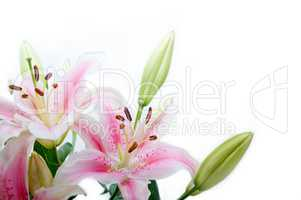 lily flowers corner frame