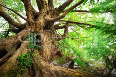 Beeindruckender Baumstamm im schönen Licht