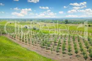 orchard, agricultural land and blue cloudy sky