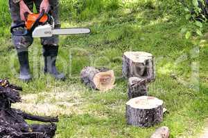 People at work: man sawing trees.