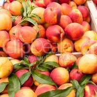 Weekly market Tuscany - apricot