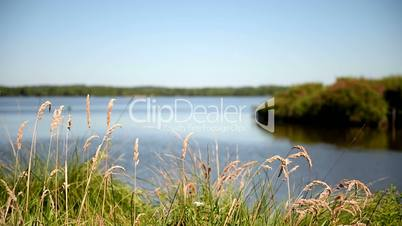 Lake in South France. Follow focus from blades to bank. Long shot.