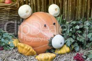 Funny figure in the form of pigs made from pumpkins