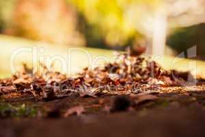 Surface level shot of autumn leaves