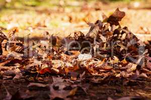 Leaves on field during autumn