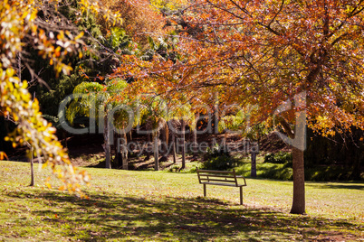 Trees at park during autumn