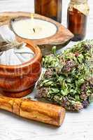 clover medicinal plant