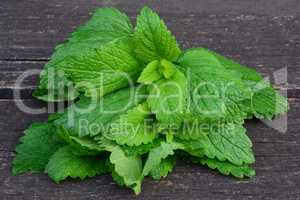 Fresh, young lemon balm leaves