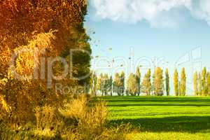Autumn landscape with green wheat field and yellow woods