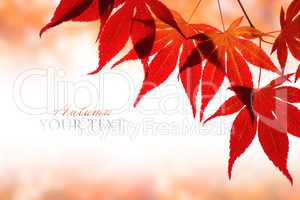 Beautiful red maple border over white with space for text