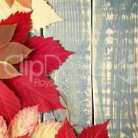 Autumn leaves on shabby vintage wood